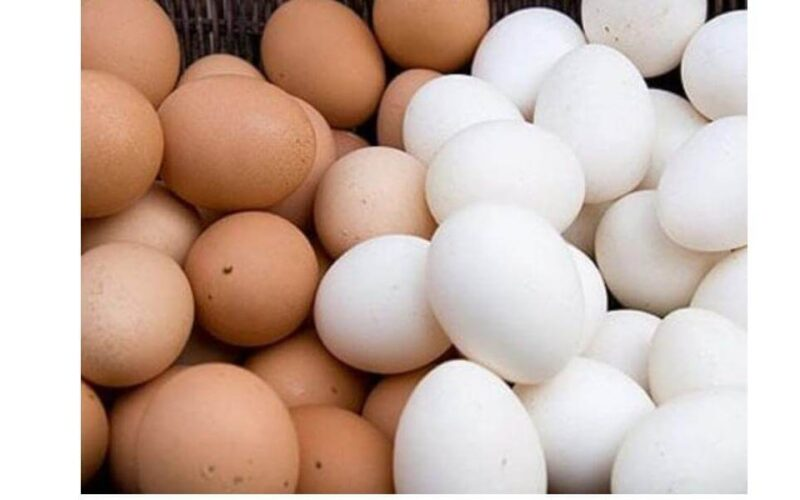 أسعار البيض اليوم