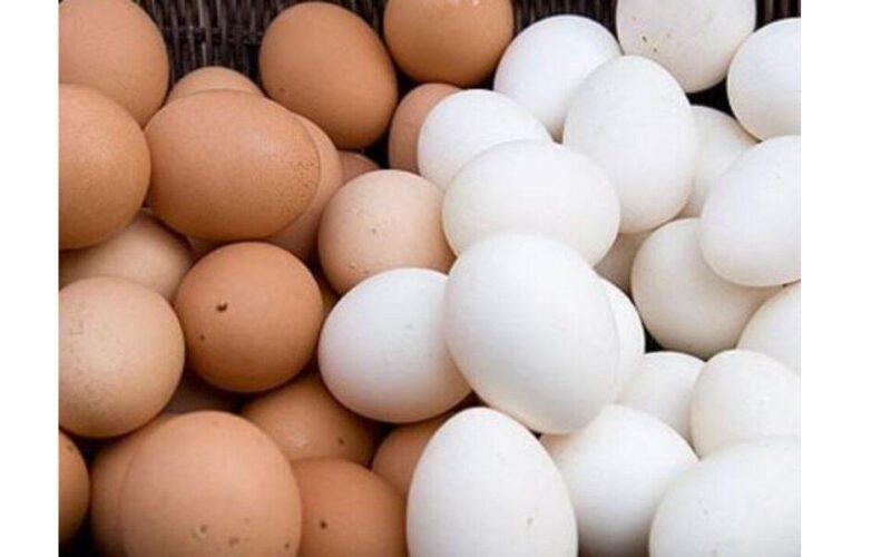 أسعار البيض اليوم في أسواق مصر